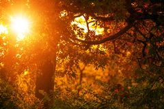 Листопад и заход солнца стоковое фото