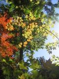 Листопад в Мейне Стоковая Фотография