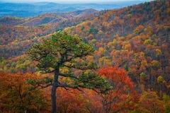 Листопад национального парка Shenandoah стоковое фото rf