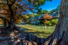Листопад на парке штата Guadalupe, Техасе стоковое фото rf