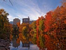 Листопад осени в Central Park Нью-Йорке Стоковые Фото