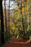 Листопад осени Стоковое Фото