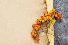 Листы винтажных хворостин ягоды бумаги и рябины Стоковые Изображения
