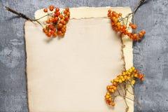 Листы винтажных хворостин ягоды бумаги и рябины Стоковое Изображение RF