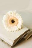 листы дневника biege раскрытые цветком Стоковые Фото