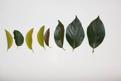 10 листьев осени Стоковые Изображения RF