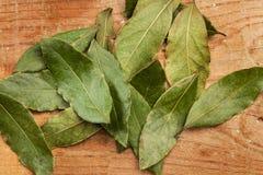 Листья лавра Стоковые Изображения