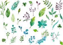 Листья акварели Стоковое Фото