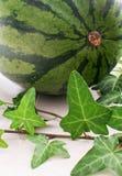 Листья арбуза все и зеленые Стоковое Фото