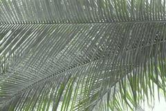 Листья ладони - абстрактная естественная предпосылка с тенями зеленого цвета Стоковая Фотография
