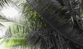 Листья ладони - абстрактная естественная серая предпосылка с касанием зеленого цвета Стоковая Фотография RF