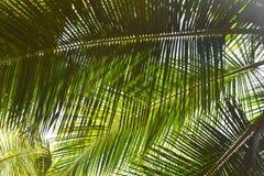 Листья ладони - абстрактная зеленая естественная предпосылка Стоковые Изображения