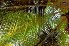 Листья ладони - абстрактная предпосылка иллюстрации Стоковое Фото