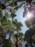 Листья ладони и голубое небо в восходе солнца Влияние Bokeh, оформление лета Стоковая Фотография