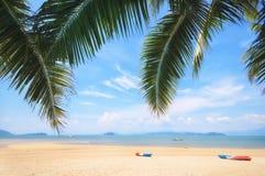 Листья ладони кокоса и тропическая предпосылка пляжа Стоковые Фотографии RF
