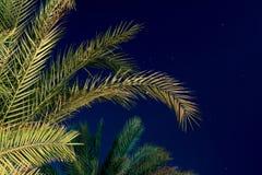 Листья ладони Стоковое фото RF