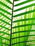 Листья 2 ладони Стоковые Изображения RF