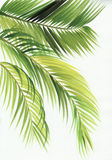 Листья ладони иллюстрация вектора