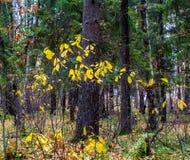 Листья бабочки леса осени стоковая фотография rf