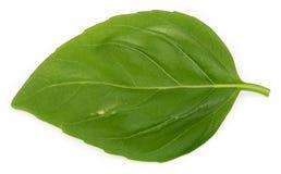 листья базилика одиночные Стоковое фото RF