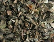 листья базилика Стоковая Фотография RF