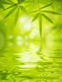 листья бамбука Стоковая Фотография RF