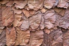 Листья банана крыши Стоковое фото RF