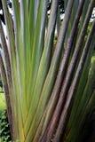 Листья банана Стоковое Изображение