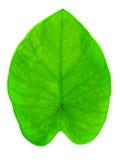 Листья батата Стоковые Изображения RF