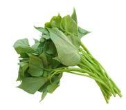 Листья батата Belacan Стоковое фото RF