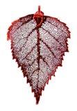 листья березы Стоковые Изображения RF