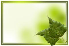Листья березы Стоковая Фотография RF