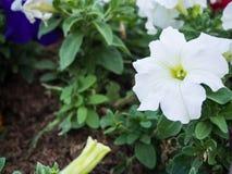 Листья белого цветка и зеленого цвета Стоковая Фотография