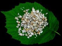 листья биополимера свежие Стоковое Изображение