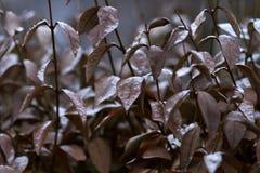 Листья Брайна Стоковые Изображения RF