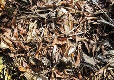 Листья Брауна сухие на песке стоковые изображения rf