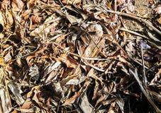Листья Брауна сухие на песке стоковое изображение rf