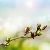 листья бутона Стоковое Фото