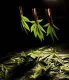 Листья вала травы 4 Стоковые Фотографии RF