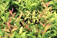 Листья валов стоковое фото