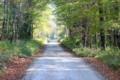 Листья вдоль дороги Стоковые Изображения RF