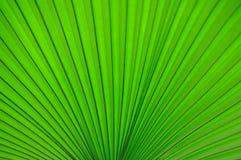 листья вентилятора Стоковые Изображения RF