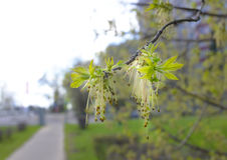 Листья весны в парке стоковые изображения rf