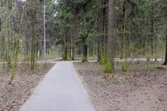 Листья весны в парке стоковая фотография rf