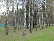 Листья весны в парке Стоковое Изображение RF