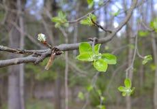Листья весны в парке стоковое изображение