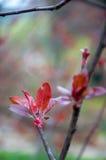 Листья весны Стоковое Фото