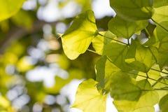 Листья ветвей дерева стоковые фото