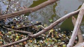 Листья ветви и воды видеоматериал