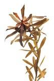листья ветви Стоковое Изображение
